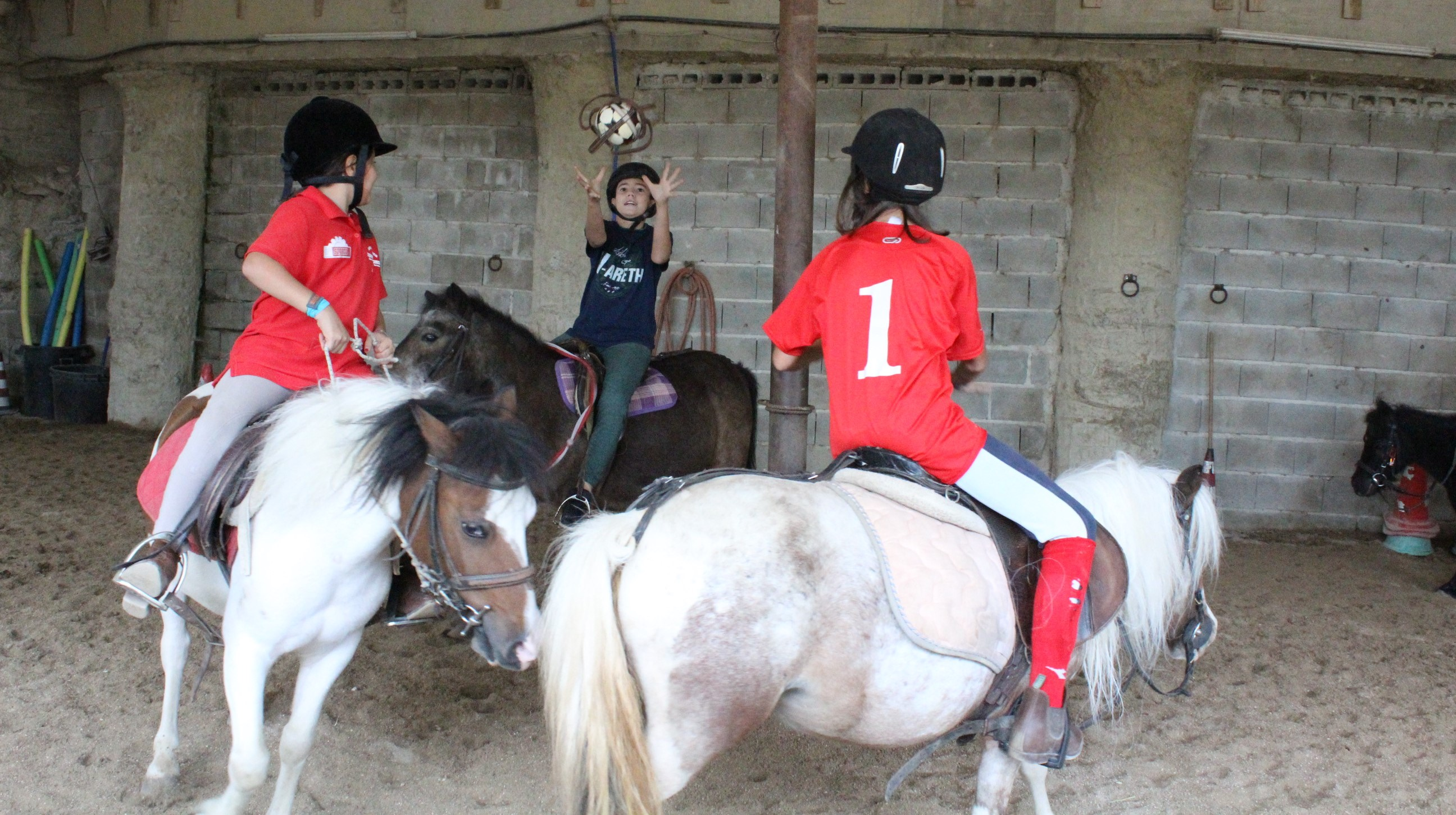 horseball maneggio team horse